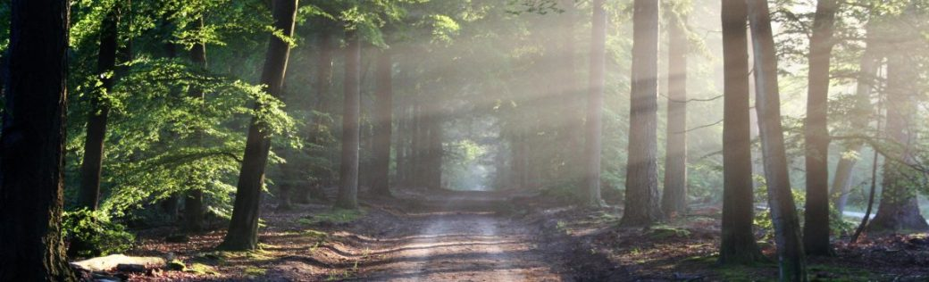 cropped-road-sun-rays-path.jpg